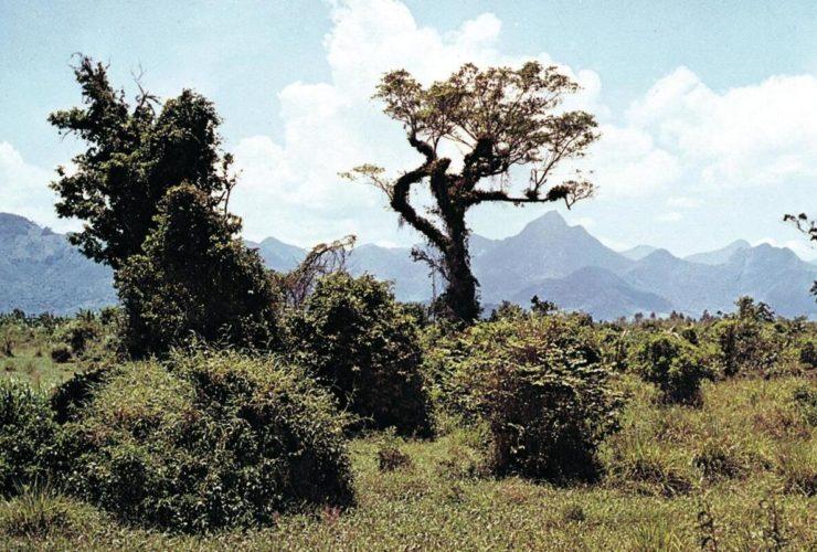 Caatinga Brazil Caatinga