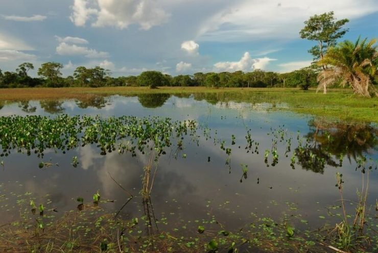 From the wetland area Pantanal