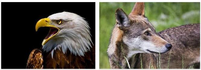 Animals in United States