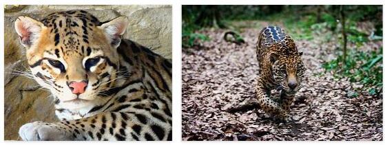 Mexico Animals