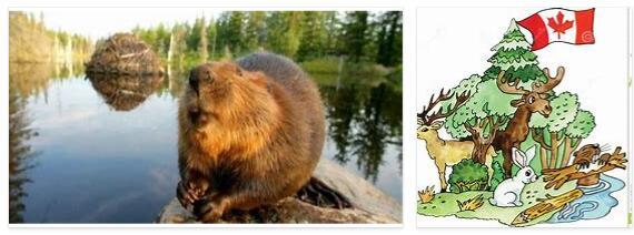 animal symbols of Canada