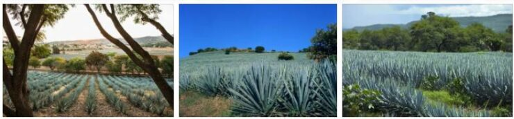 Tequila landscape (world heritage)